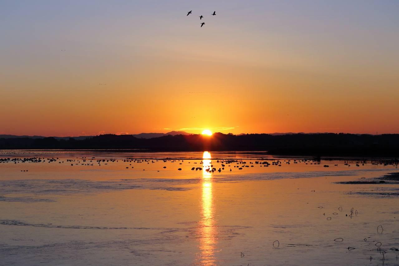 伊豆沼の渡り鳥