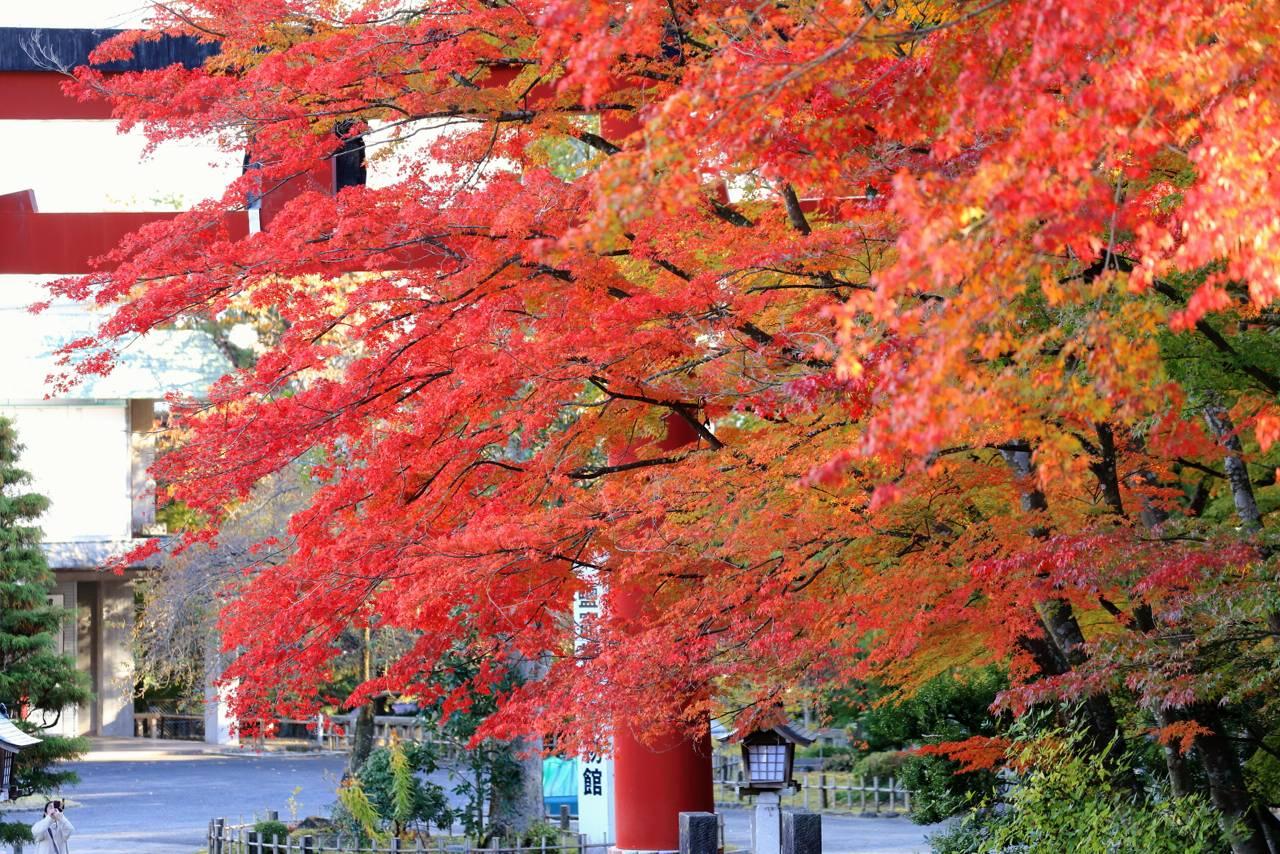 塩釜神社の紅葉と菊まつり