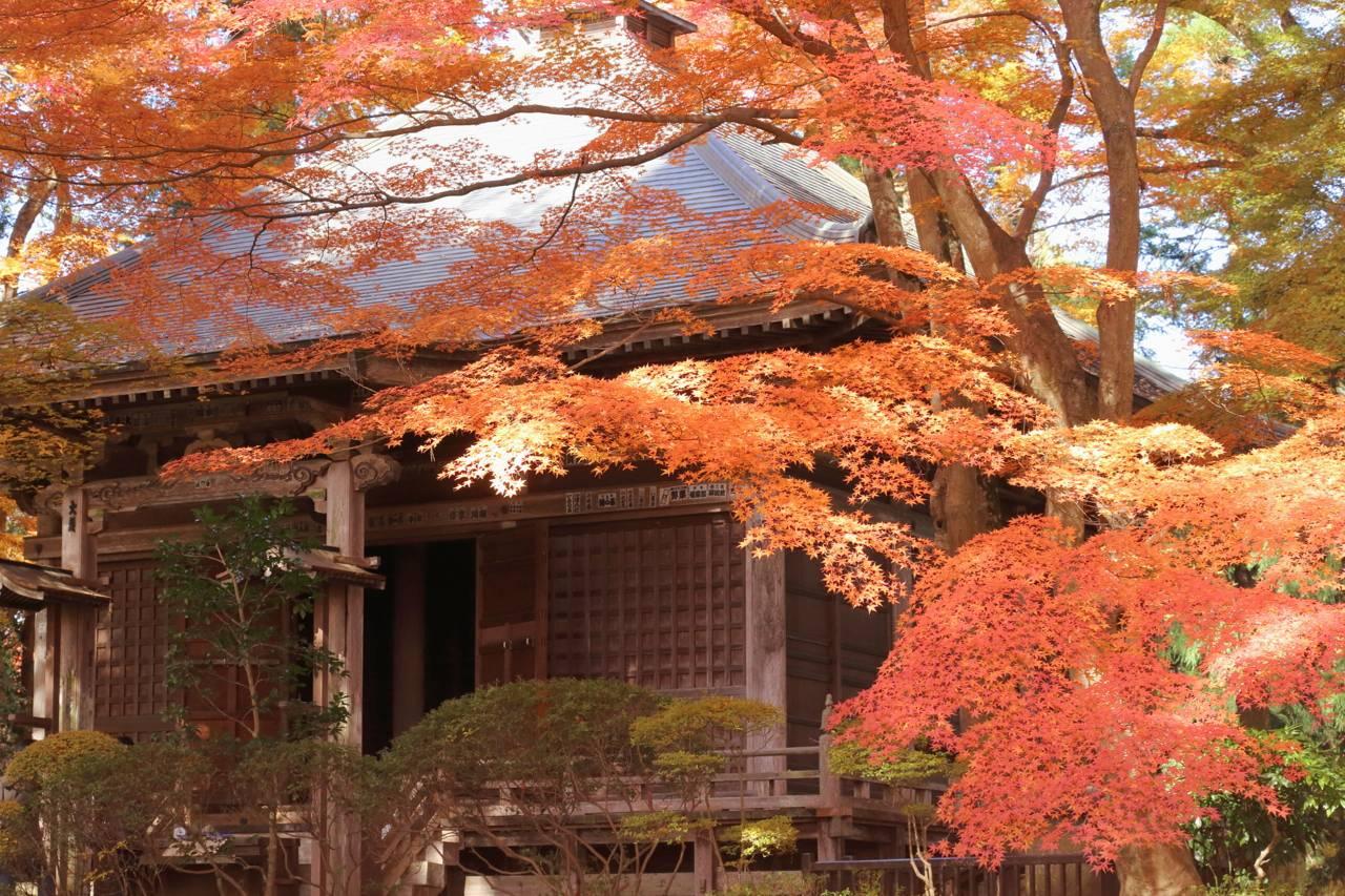 中尊寺の紅葉