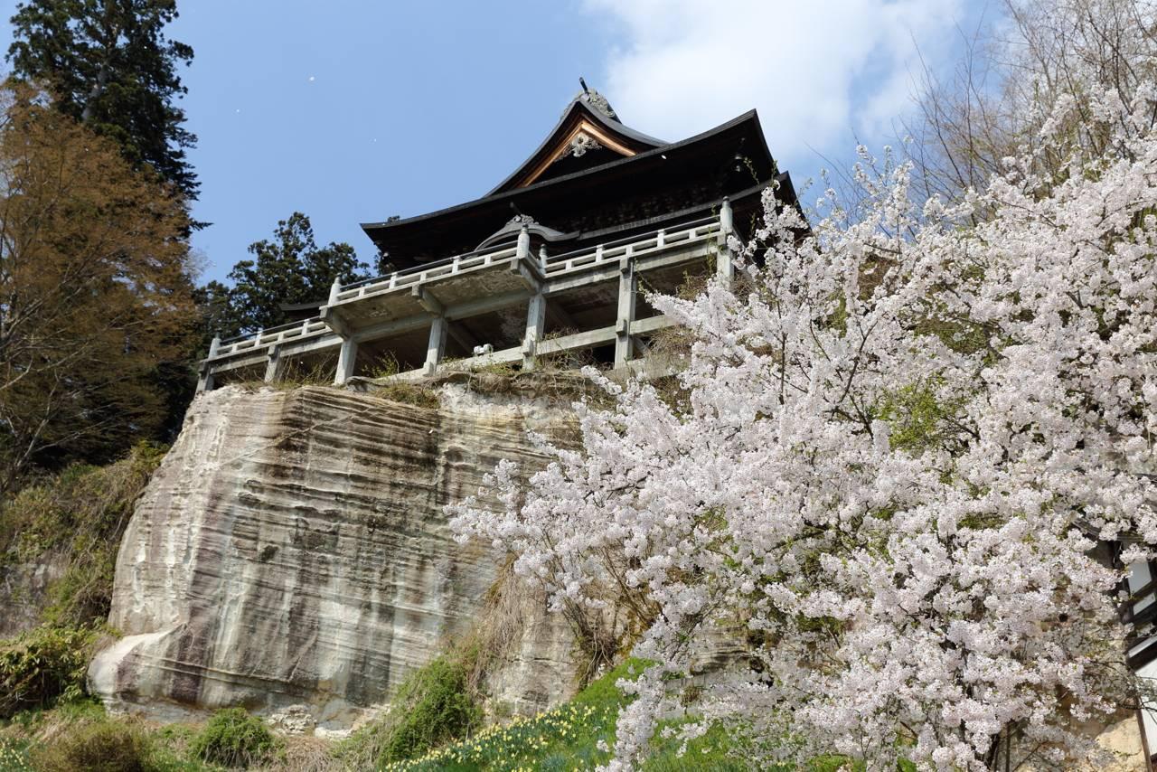 福満虚空蔵尊 圓蔵寺の桜