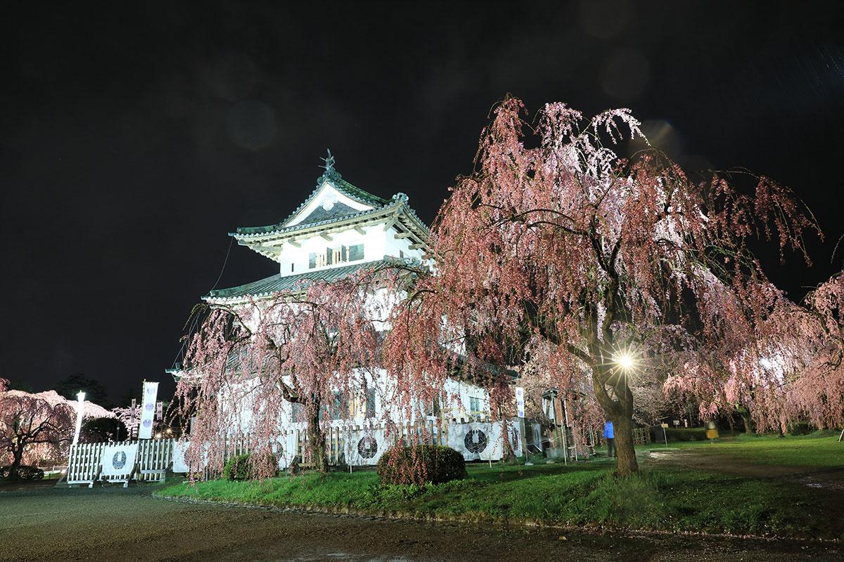 青森県弘前市 弘前城の桜